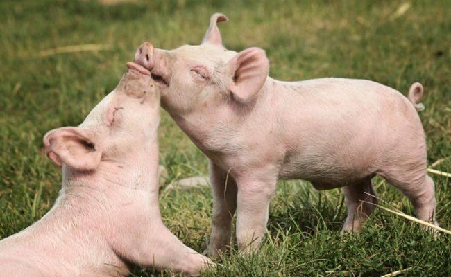 Minister Grapperhaus steunt dierenbeulen: de wereld op zijn kop!
